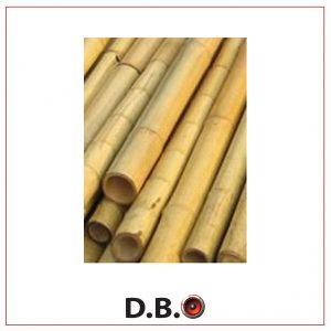 עצי במבוק להשכרה - DBO